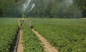 Полив водой из скважины Картофель